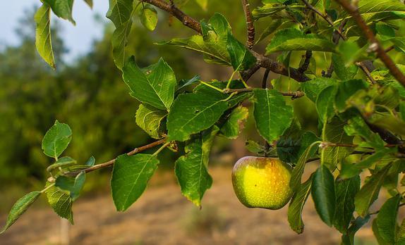 nowy_sad_w_lubaniu_sadzenie