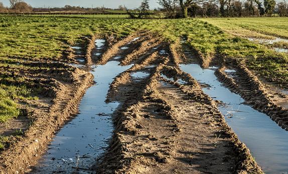 po pierwsze gleba