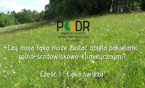 łąka_swieża_film